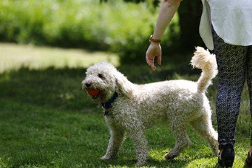 Dog - Hamilton